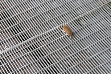 Mouse at Wire Mesh