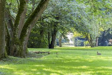 Fototapeta idyllic park scenery