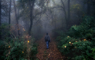 Photographer walking on the path in forest
