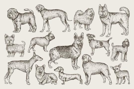 Hand drawn dogs vector set. Vector illustration