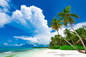 resort beach palm tree sea Dominican Republic