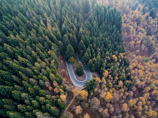 Overhead aerial top view over hairpin turn road bend in countryside autumn pine forest.Fall orange,green,yellow,red tree woods.Mountain curve street path background.Straight-down above perspective