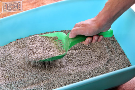 Cleaning cat litter box. Hand is cleaning of cat litter box with green spatula. Toilet cat cleaning sand. Man hand and cat litter box. Kitty litter. Plastic scoop and shovel. Cleaning cat excrement.