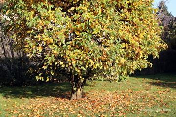 Baum mit Laub im Herbst