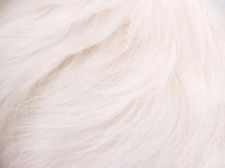 White Dog Fur