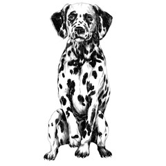 Dalmatians sketch vector graphics monochrome black-and-white drawing