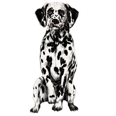 Dalmatians sketch vector graphics color picture