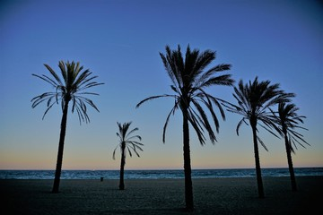Four palm trees on a beach in sunset