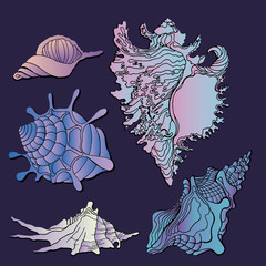 Sea shells icon vector. Set of various sea shells icon and starfish silhouettes