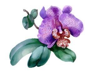 garden orchid flower on white background