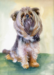 Hand drawn cute yorkshire terrier dog