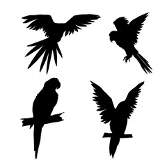 Vector illustration. Seth from parrots in different angles. Black silhouette.