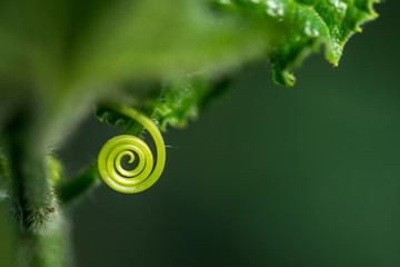 Foto auf Acrylglas Spirale Extremely close up of a plant spiral - selective focus