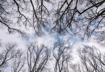branches of naked trees under the winter sky. lovely nature background in forest