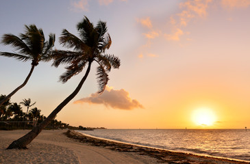 Beautiful sunrise at Smathers Beach with Palm Tree in foreground. Smathers Beach is the largest public beach in Key West, Florida, United States. It is approximately a half mile long Wall mural