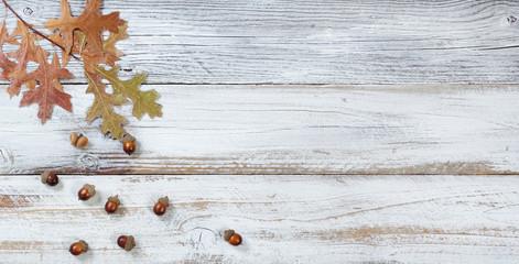 Falling Oak leaves and acorns