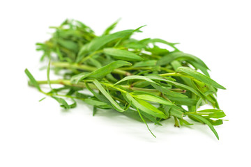 Tarragon with a White Background