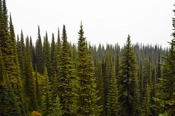 Landscape in Canada