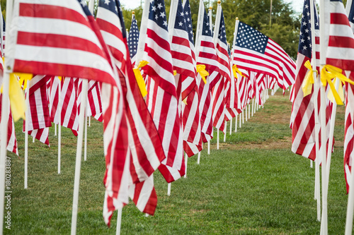 Field of Veterans Day American Flags Waving in the Breeze