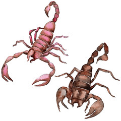 Exotic scorpion wild insect in a watercolor style isolated. Full name of the insect: scorpion. Aquarelle wild insect for background, texture, wrapper pattern or tattoo.