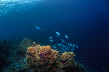 Underwater sport, snorkeling travel activity, coral reef, deep blue water