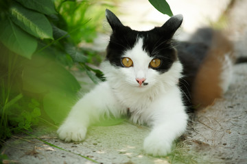 Black and white small kitten in green garden