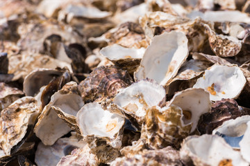 Oyster shells close-up, Leucate, France. Close-up.