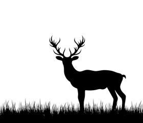 Silhouette Deer, Stag, Reindeer in Forest Grass