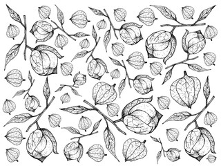 Hand Drawn of Fresh Tomatillos FruitBackground