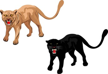 Two vector puma and panther, in various poses isolated on white illustration