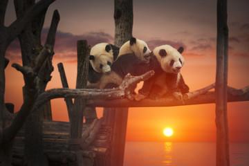 Autocollant pour porte Panda Big panda