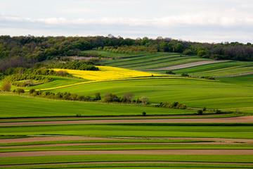 Fields in Austria landscape in spring
