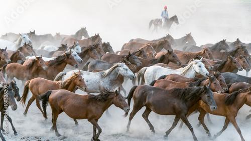 Horses run gallop in dust