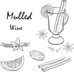 Mulled Wine and spices, orange, apple, cinnamon, carnation, anise, vanilla, clove, ginger. Hand drawn vector Illustration. Set in sketch style. Classical winter drink.