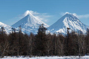 Kamchatka winter volcanic landscape: eruption active Klyuchevskoy Volcano, snowy Kamen Volcano and scenery winter forest. Russian Far East, Kamchatka Peninsula, Klyuchevskaya Group of Volcanoes.