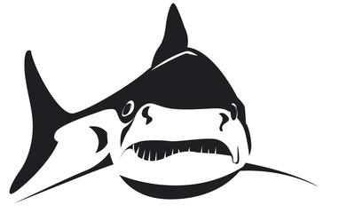 Requin nageant très énervé