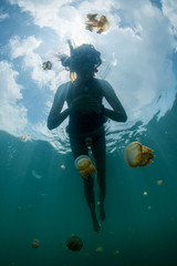 woman snorkeling with Martigias Papua Jellyfish, Jellyfish Lake, Kakaban, Indonesia