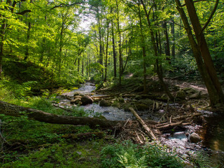 Forest Stream, Dense Lush Green Foliage, Delaware Water Gap