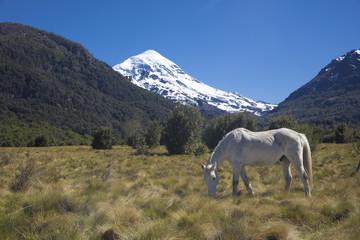 Cara sur del Volcán Lanin en el parque Nacional Lanin, Neuquén, Argentina