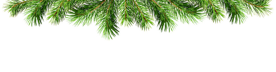Green pine twigs for Christmas top border