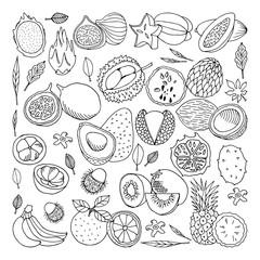 Tropical fruits. illustration, doodle set