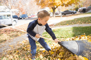 Little boy raking leaves