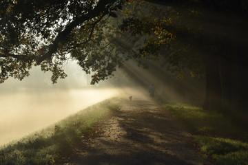 Mystery road, misty landscape, morning autumn park with sun rays