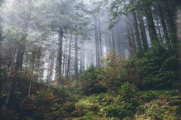 Fantastic forest glowing by sunlight. Location: Carpathian, Ukraine, Europe.