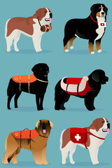 Set of dogs rescuers