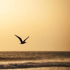 Möwe fliegt am Strand entlang