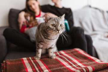 Close up photo of beautiful cat standing on sofa at home with couple on background