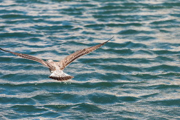 The seagull is flying over the water in Sete, Languedoc Roussillon, France. Copy space for text.