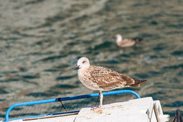 Seagull stands on the background of water in Sete, France. Copy space for text.