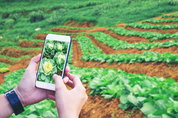 Agronomist man using Smartphone in Agriculture farm (Internet of things arigiculture concept)